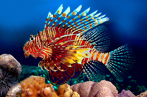 red_lionfish